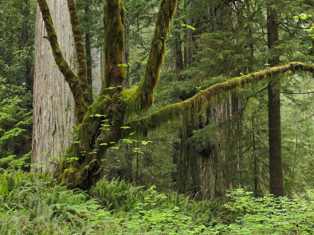 Family-Friendly Campgrounds on the California/Oregon Border
