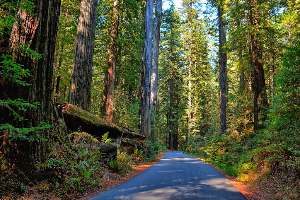 Humboldt Redwoods State Park Weott California