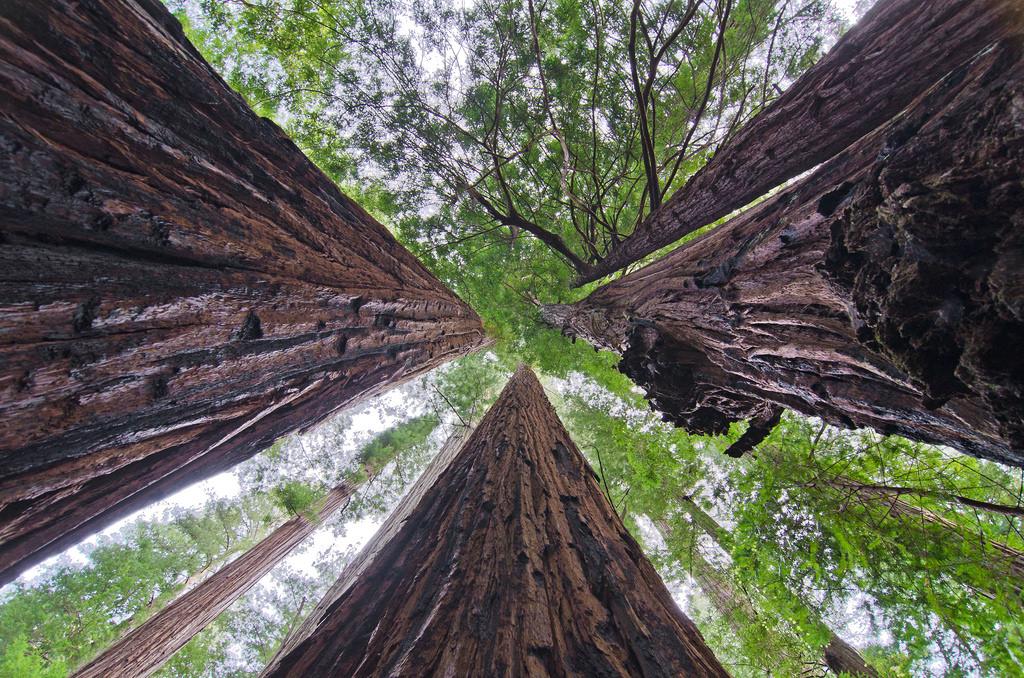 Humboldt Redwood State Park Mahan Plaque Loop Weott California