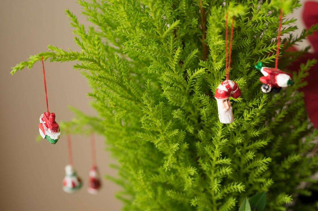 cut your own u cut christmas tree farms near san francisco