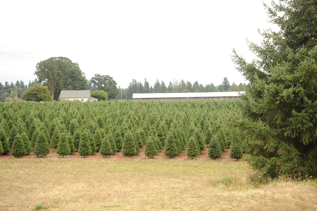 best christmas tree farms in dallasft worth