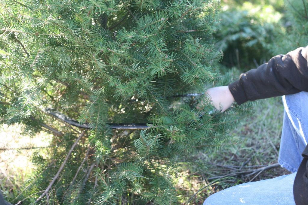 nearby hotel deals - Middleburg Christmas Tree Farm