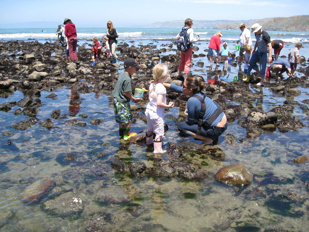 Kid Friendly Tide Pools In California