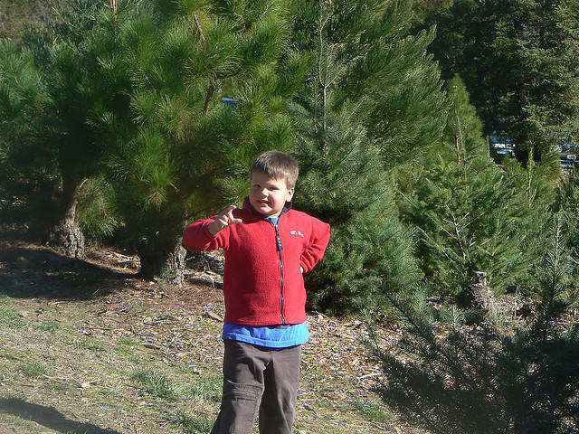 Choose and cut Christmas Tree Farms in San Diego, CA