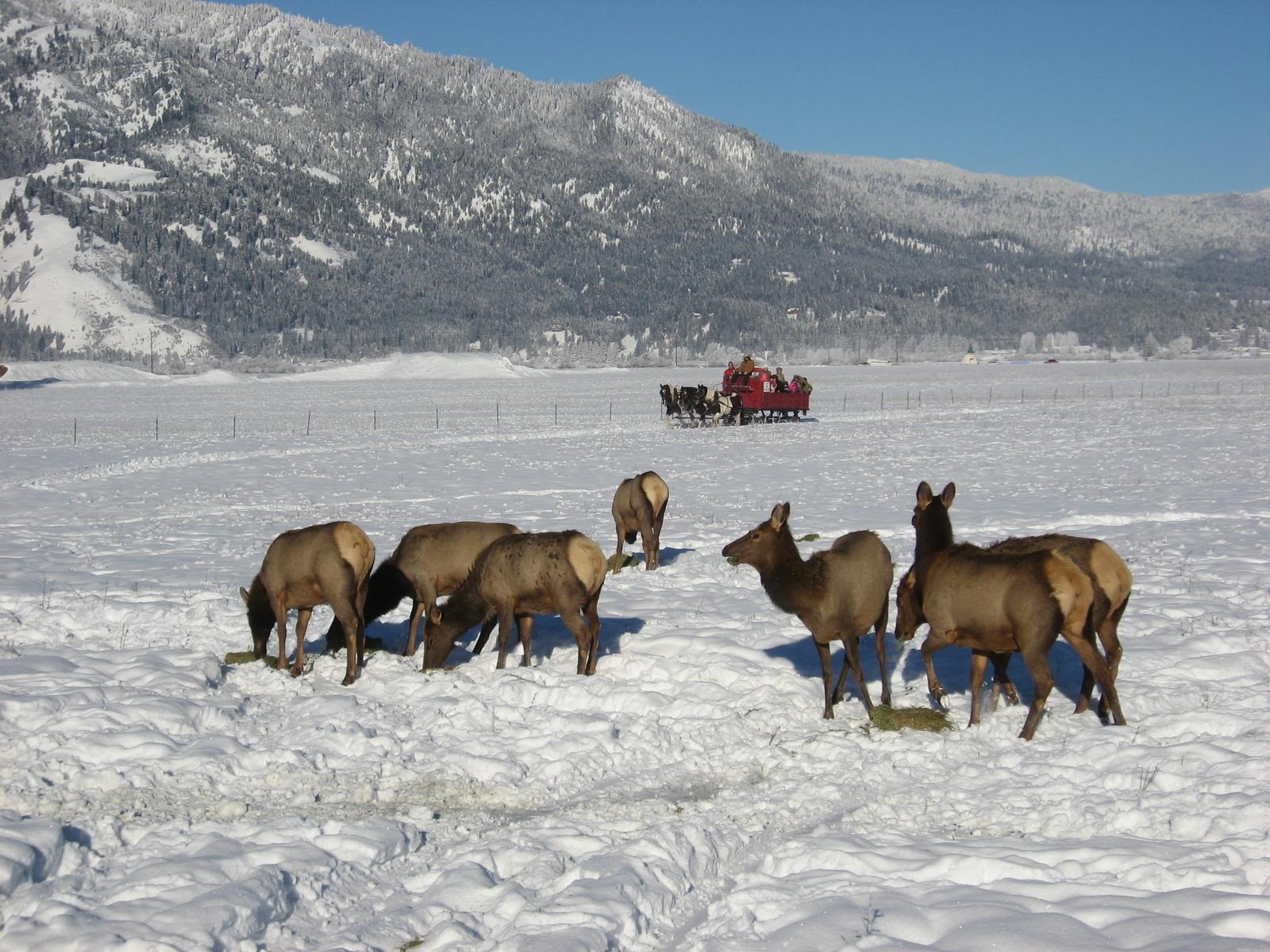 idaho sleigh rides in garden valley id parent reviews u0026 photos