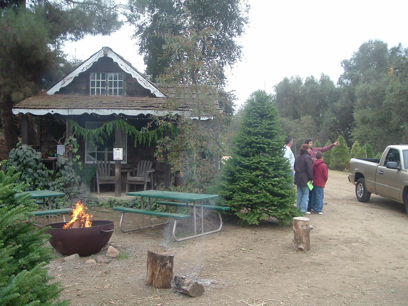 Hillcrest Christmas Tree Farm And Pumpkin Patch   Reedley, California
