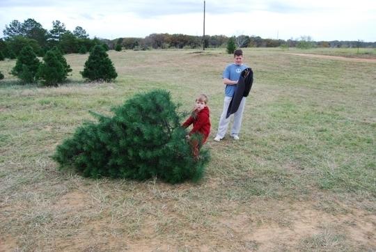 Elgin Christmas Tree Farm.Evergreen Christmas Tree Farm In Elgin Texas Kid Friendly
