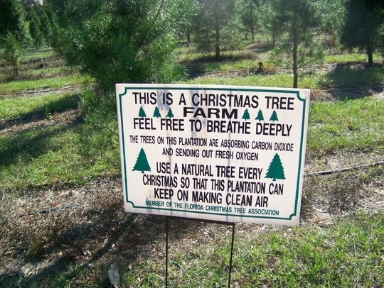 Ergle Christmas Tree Farm.Ergle Farms In Dade City Florida Kid Friendly Attractions