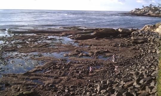 La Jolla Tide Pools Bird Rock In La Jolla Ca Parent Reviews
