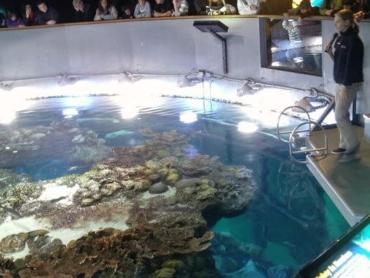 New England Aquarium - Boston, MA - Kid friendly activity ...