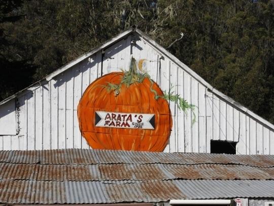 Arata Pumpkin Farm - Half Moon Bay, California
