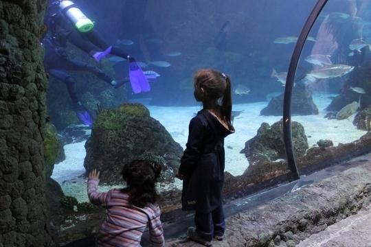 Downtown Aquarium - Denver, CO - Kid friendly activity ...