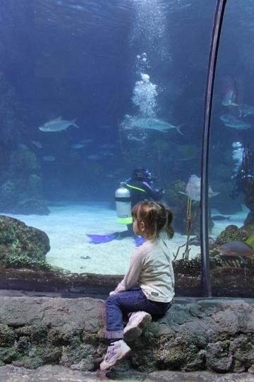 Downtown Aquarium Denver Co Kid Friendly Activity