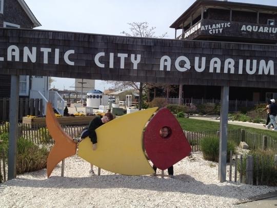 Atlantic City Aquarium Atlantic City Nj Kid Friendly