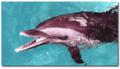 Gulfarium Marine Adventure Park | travel activity for kids - 4.22 star rating