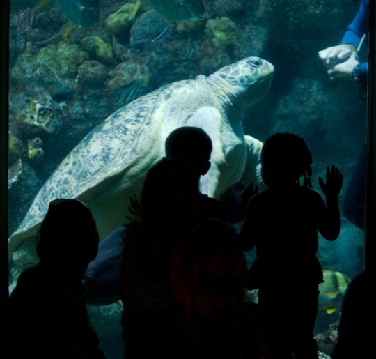 New England Aquarium Boston Ma Kid Friendly Activity