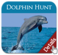 Dolphin Hunt Cruise | Port City Tour Co. | travel activity for kids - 0.0 star rating
