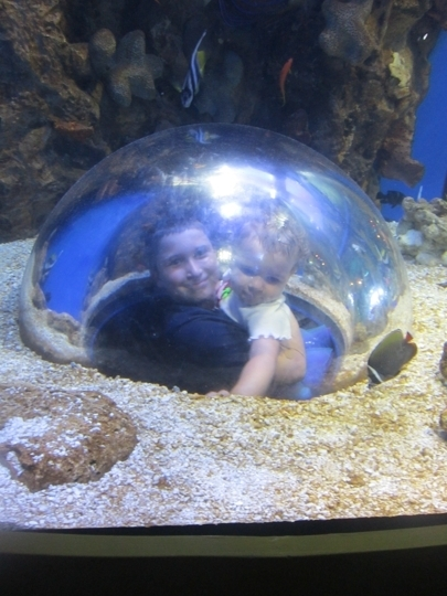 Adventure Aquarium Camden Nj Kid Friendly Activity