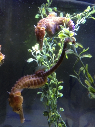 Jenkinson 39 S Aquarium Point Pleasant Beach Nj Kid