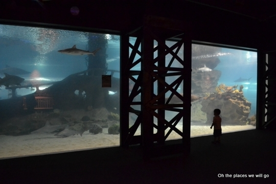 Greater Cleveland Aquarium Cleveland Oh Kid Friendly