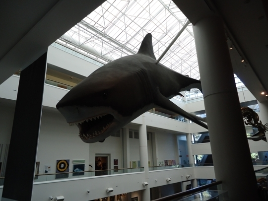 San Diego Natural History Museum Dinosaur Cafe