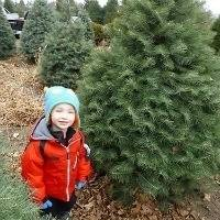 Kid_in_a_christmas_tree_farm_trekaroo_kid_friendly_reviews