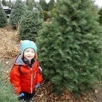 Kid_in_a_christmas_tree_farm_trekaroo_kid_friendly_reviews