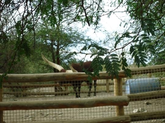 Living Desert Zoo And Gardens Palm Desert Ca Kid Friendly Acti Trekaroo