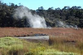 Steam Vents - Volcano, Hawaii
