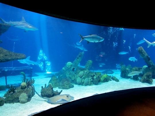 Aquarium Related Keywords & Suggestions - Albuquerque Aquarium ...