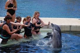 Dolphin Quest - Waikoloa, Hawaii