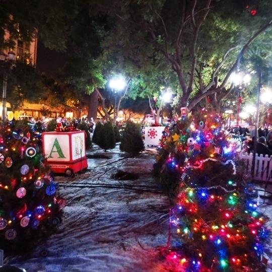 Christmas Trees Gold Coast