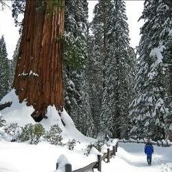 Sequoia_winter_trekaroo