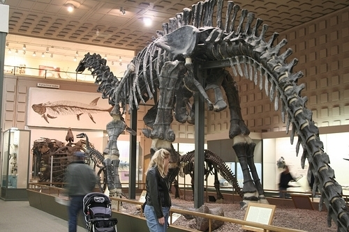 Peabody Museum Of Natural History New Haven Ct Kid