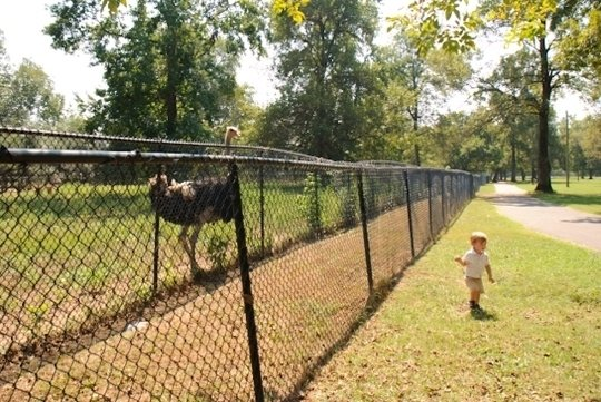 Noah S Ark Animal Sanctuary Locust Grove Ga Kid