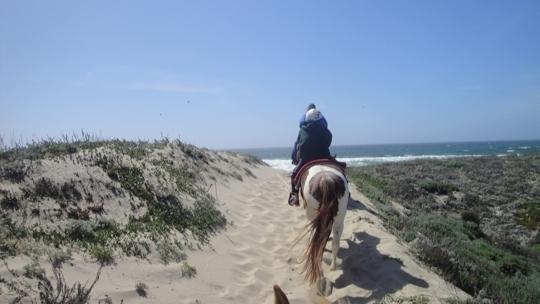 Monterey Bay Equestrian Center In Salinas California
