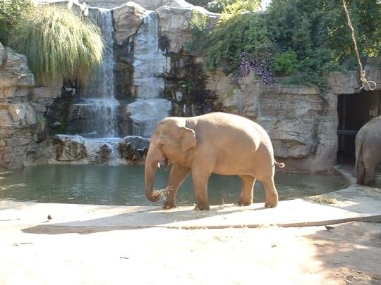 Fresno Chaffee Zoo Fresno Ca Kid Friendly Activity
