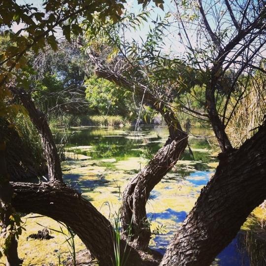 Wildlands conservancy oak glen preserve yucaipa ca for Oak glen park