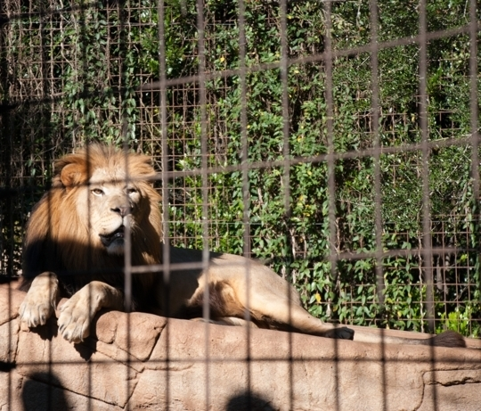 Greenville Zoo Greenville Sc Kid Friendly Activity