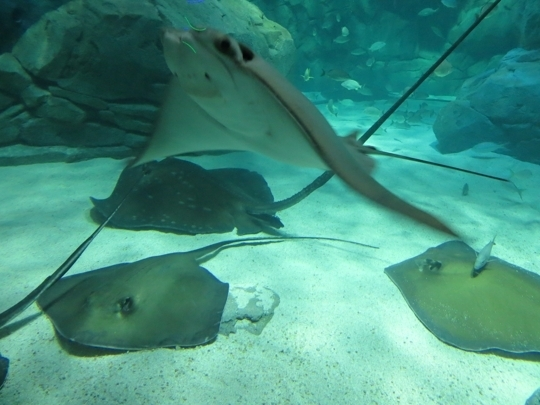 Ripleys Aquarium of Canada - Toronto, ON - Kid friendly activity r ...