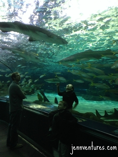 Ripley 39 S Aquarium Myrtle Beach Sc Kid Friendly