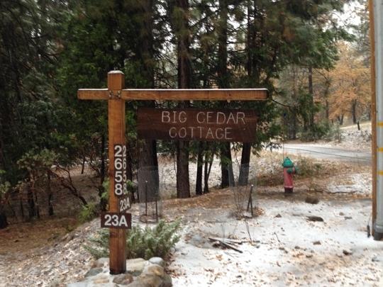 The Redwoods In Yosemite Yosemite National Park Ca