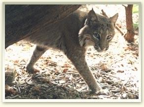 Bobcat Of Pittsburgh >> Elmwood Park Zoo - Norristown, PA - Kid friendly activity reviews - Trekaroo