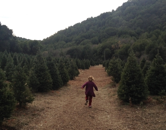Castro Valley Christmas Tree Farm