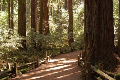 Kid Friendly Red Wood Trees