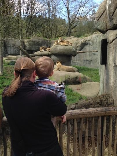 Oregon Zoo: Kid Friendly Activity Reviews