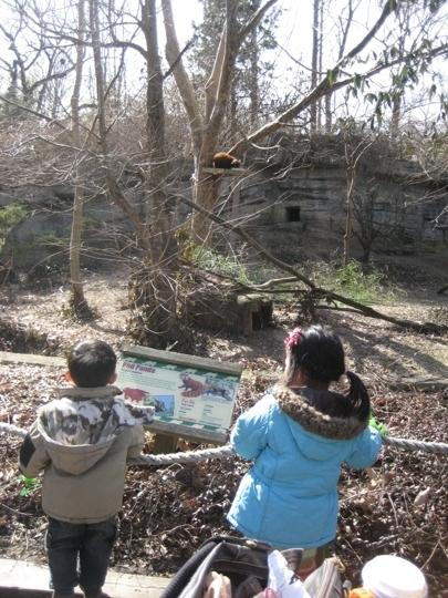 Cincinnati Zoo Botanical Garden Cincinnati Oh Kid Friendly A Trekaroo