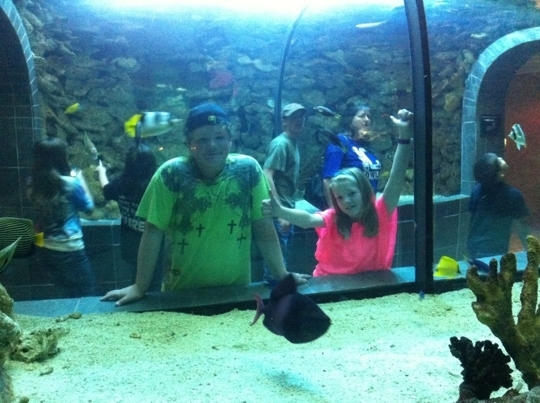Dallas World Aquarium Dallas Tx Kid Friendly Activity