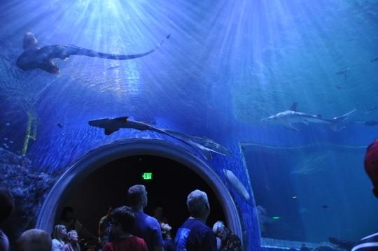 The Loveland Living Planet Aquarium Draper Ut Kid