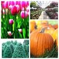 Froehlich's Farm & Garden Center | travel activity for kids - 0.0 star rating